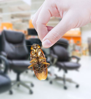 85630809 - hand holding cockroach in the shopping mall,eliminate cockroach in office equipment
