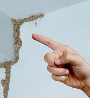 80821182 - hand pointing at a termite nest on wooden wall of a room / termite problem in house concept