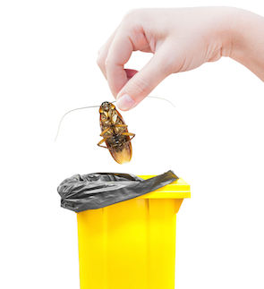 69664913 - hand holding brown cockroach and bin yellow isolated on a white background,cockroaches as carriers of disease